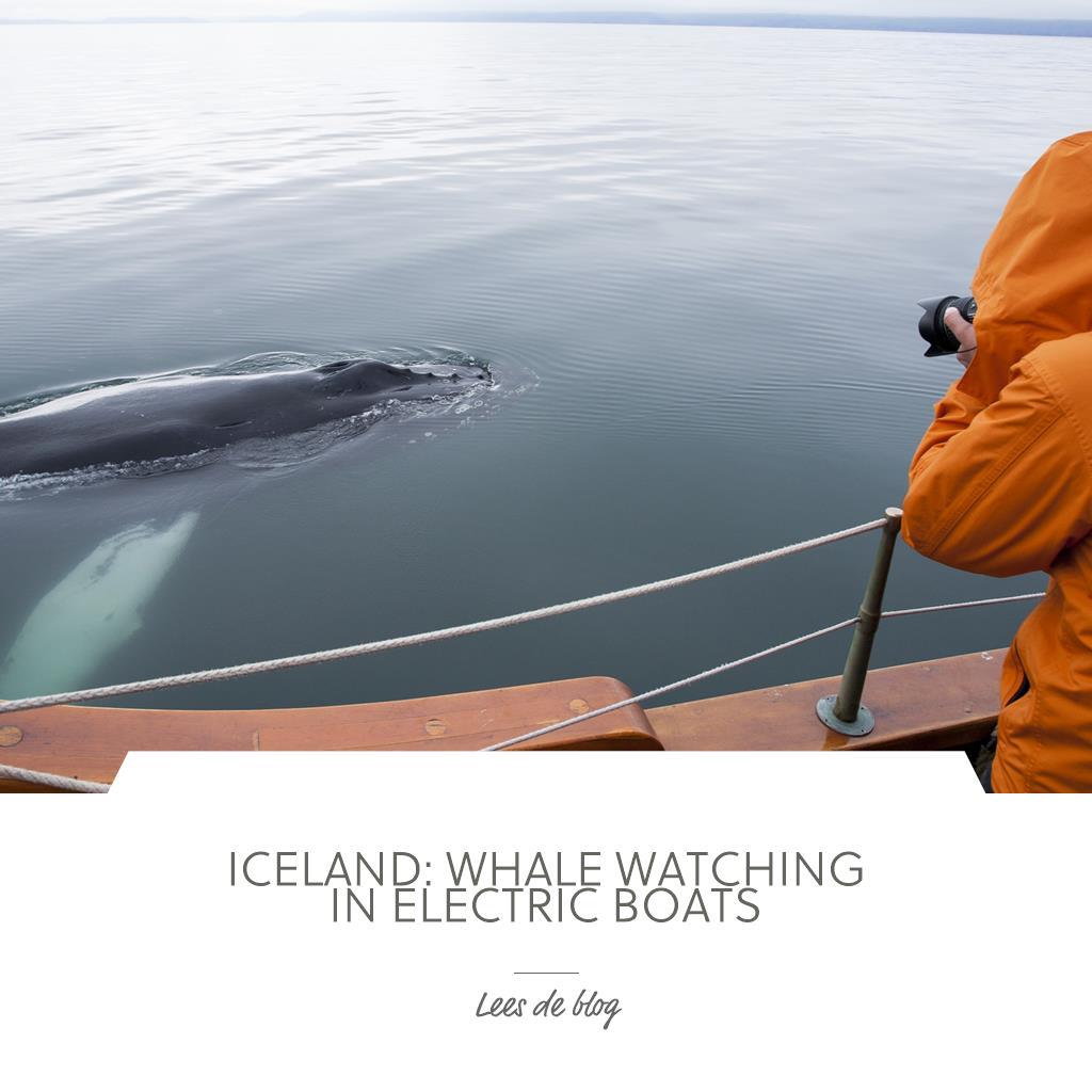 IJsland: walvissen spotten in elektrische boten